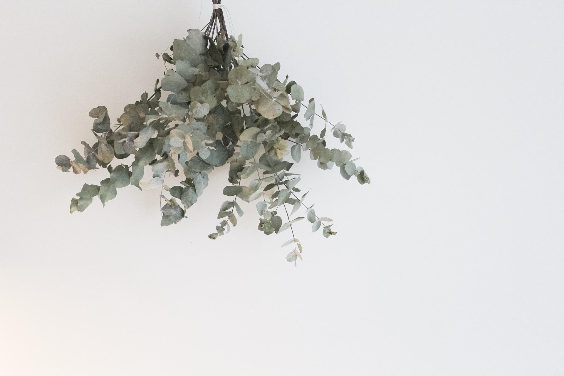 Eucalyptus och en bättre dag