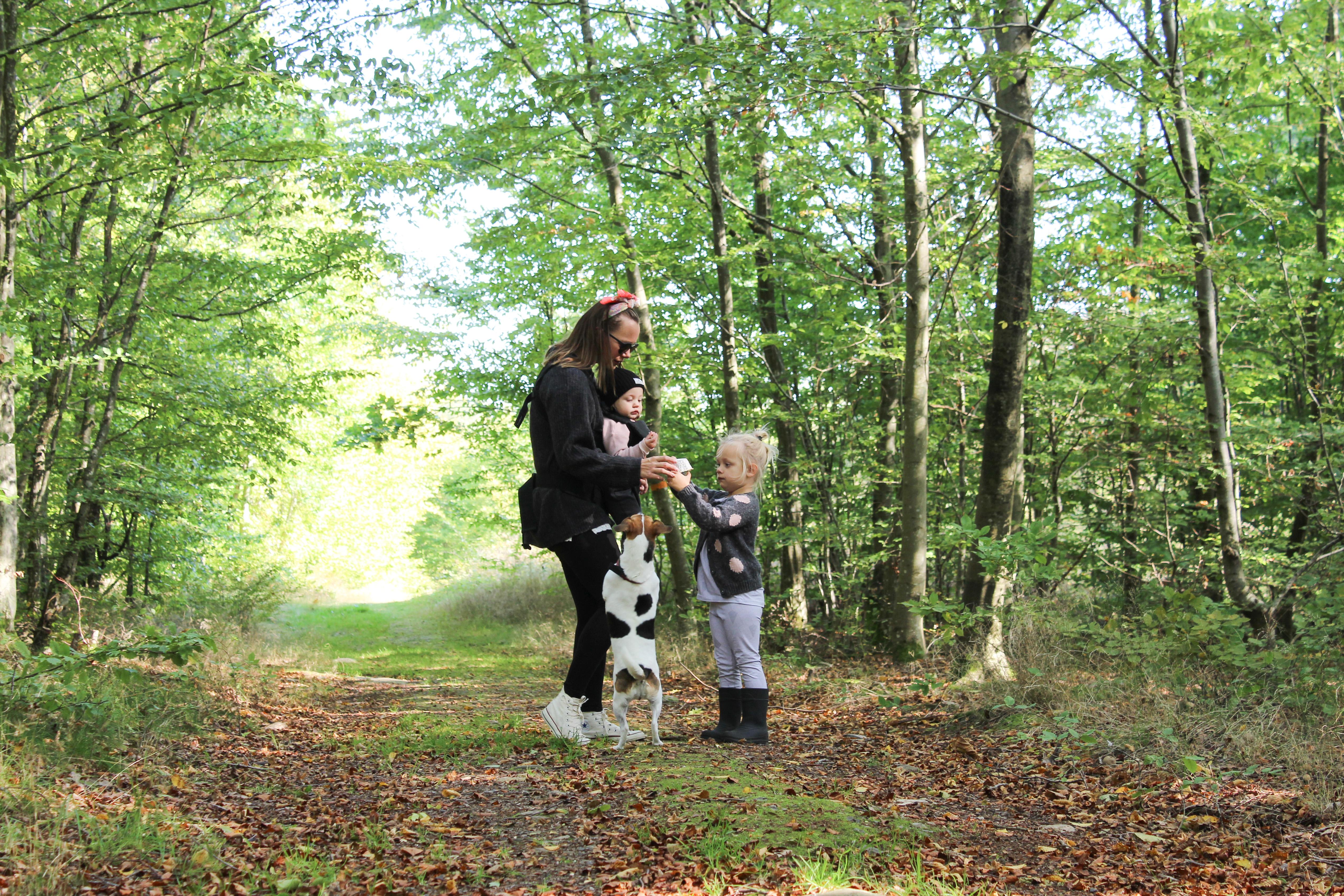En tur till skogen