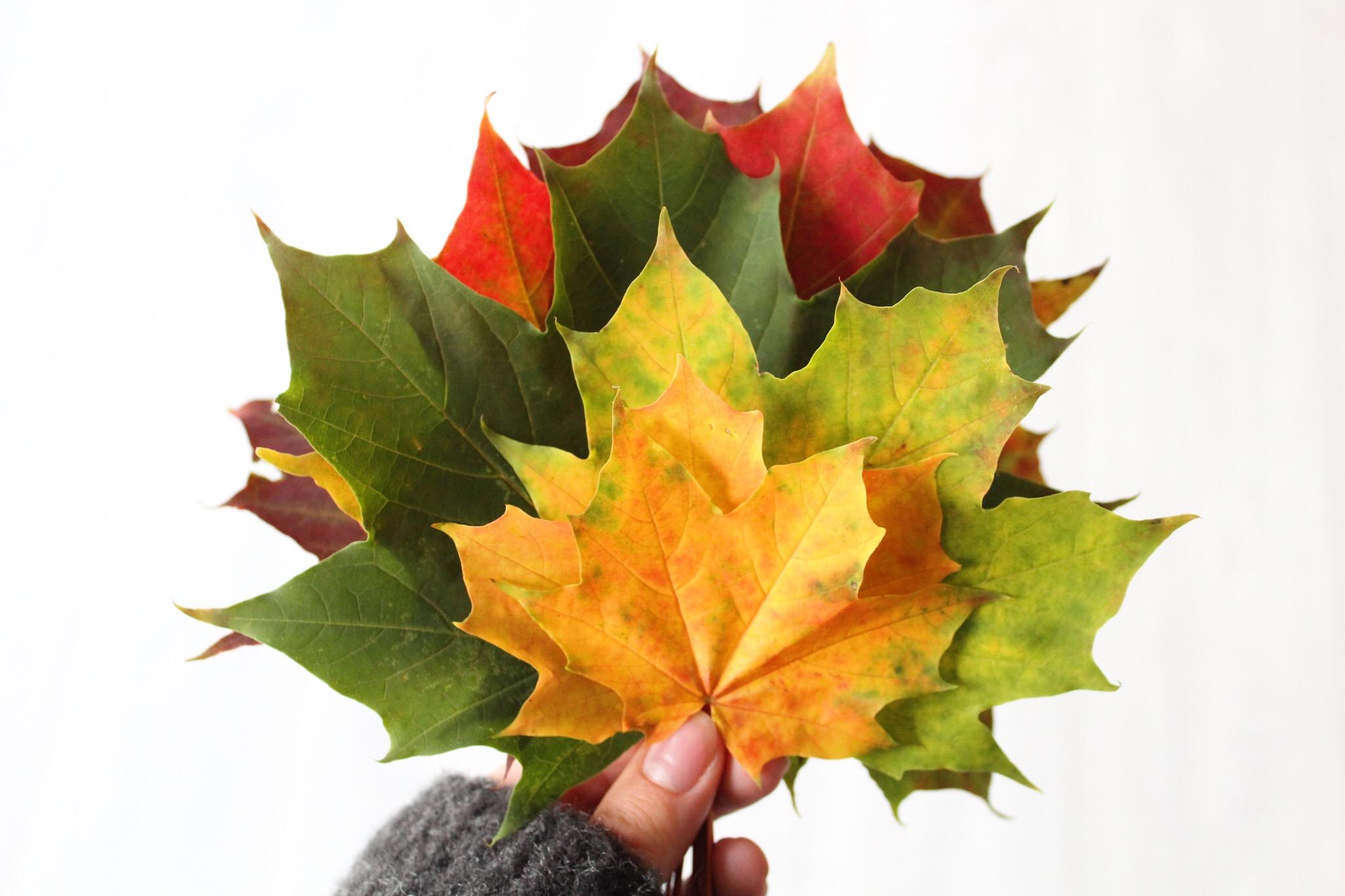 Höstens magiska färger