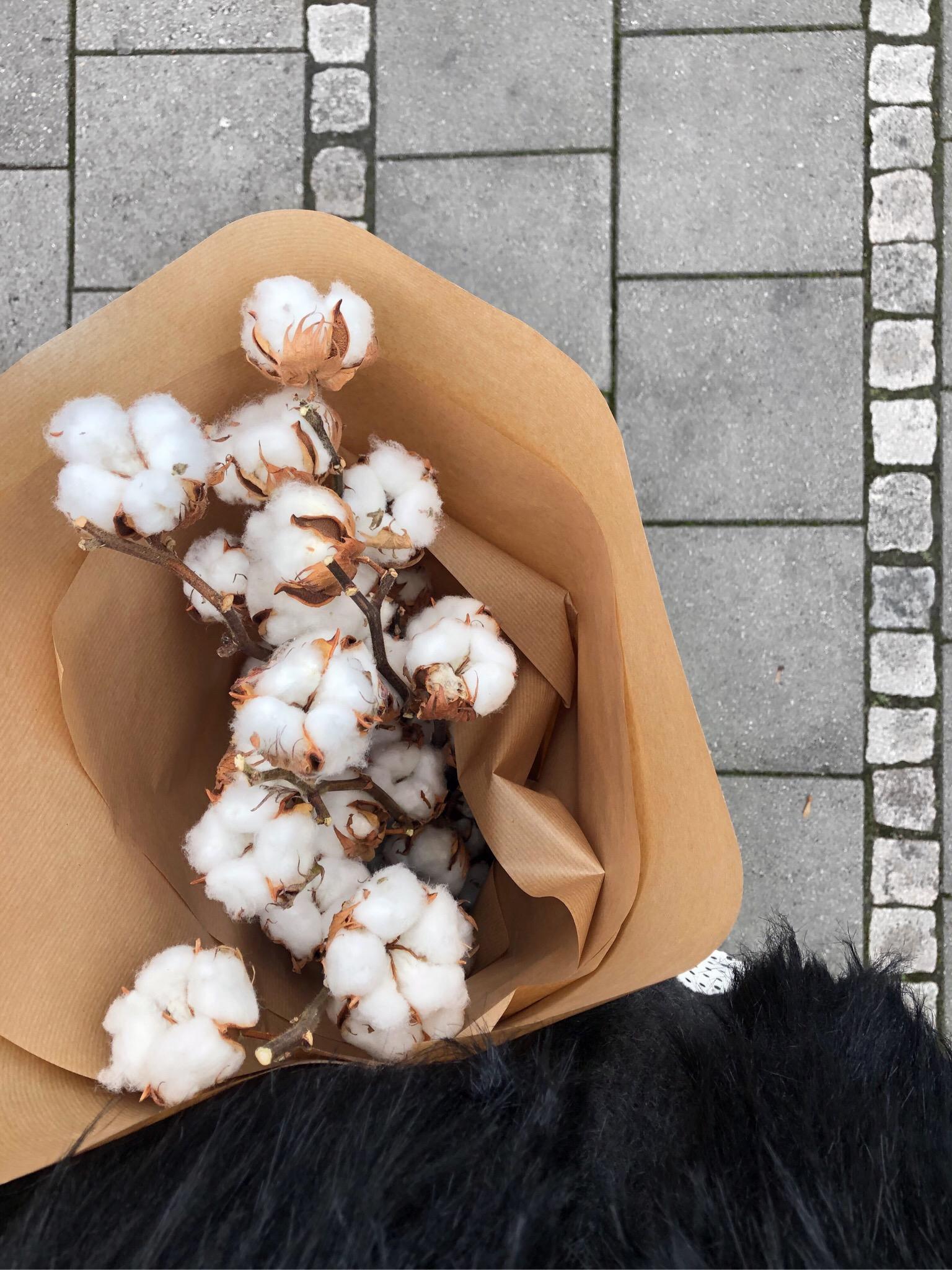 Bomullsblommor och rot i arkivet